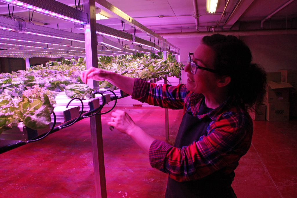 """It's horticulture, not botany!"" When her husband mentioned that Urban Greens was looking for a new manager, Mills jumped at it - even though it meant a major pay cut. At least, she says, she gets to work with plants. Photo: Rachel Waldholz/Alaska's Energy Desk"
