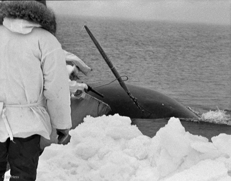 Real History Behind the �Big Miracle� Story | Alaska Public Media