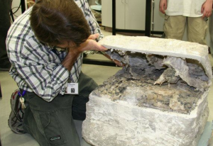 Photo Gallery: Unpacking the Fossils