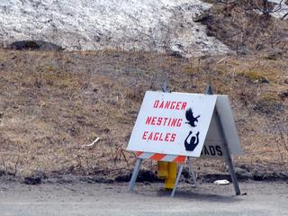 Unalaska Works To Ward Off Eagle, Human Encounters