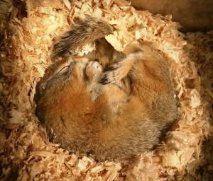 AK: Hibernation