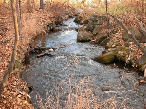 Photos © Jerrianne Lowther: Chester Creek in natural creekbed east of Muldoon Road.