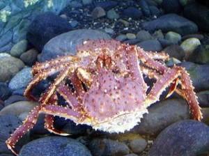 03 crab