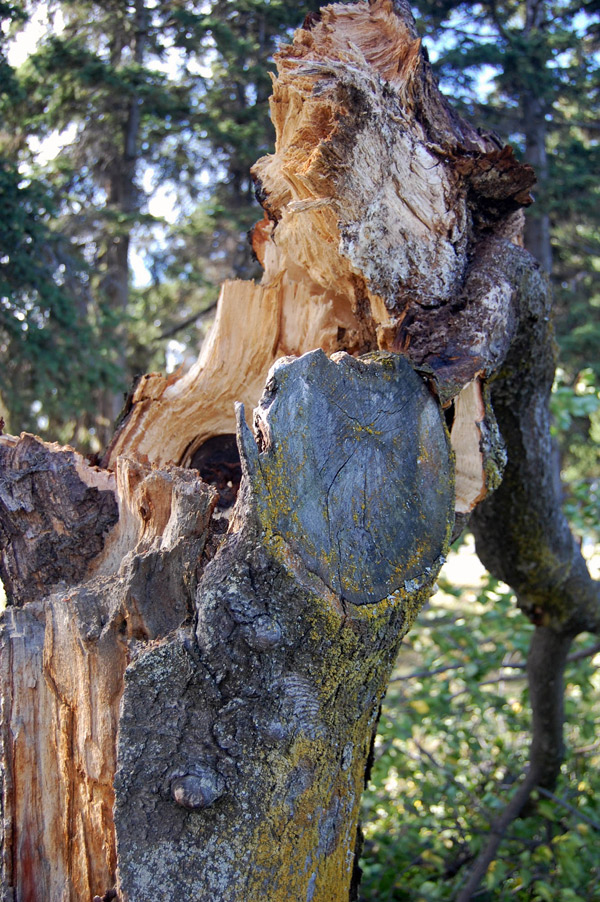 Decay at poor pruning spot