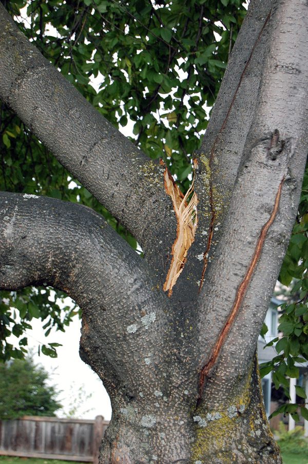 Close-up of a tree hazard