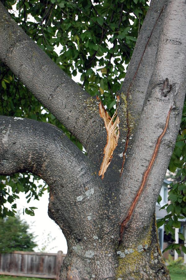 Close-up of a tree hazard