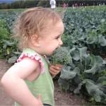 Chef Rob Kineen's daughter at Pyrahs Pioneer Peak U-Pick Farm in Palmer, AK.