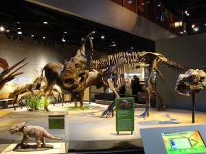 Photo courtesy of the Perot Museum of Nature and Science.