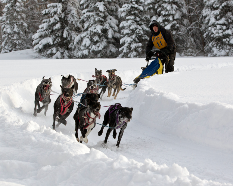 dalton_dog_mushing_Deb Baines