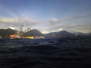 Seiners fish for herring during Wednesday's opening in Sitka Sound. The fleet brought in roughly 2,100 tons of the small silver fish during the three-hour opening. (Photo by Daniel Olbrych)