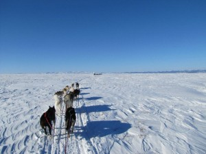 Mushing along the northern boundary of Denali. Photo courtesy Jamie Milliken, Denali area musher & guide.