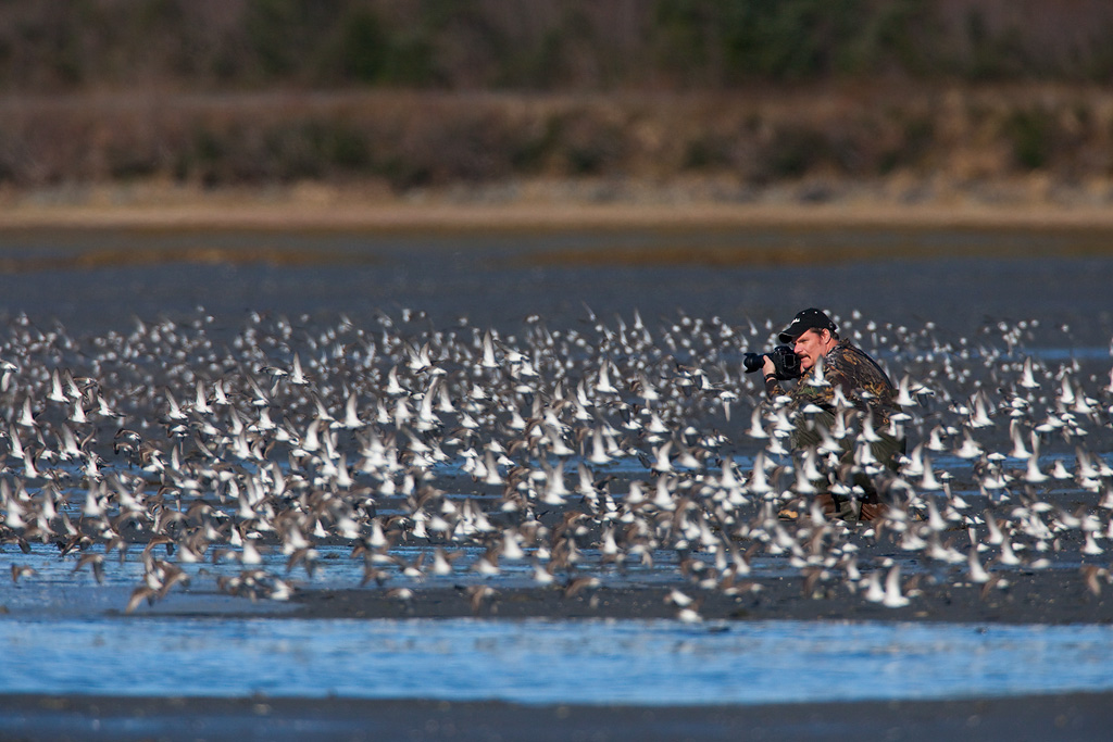 Mike Kenney surrounded by shorebird flock