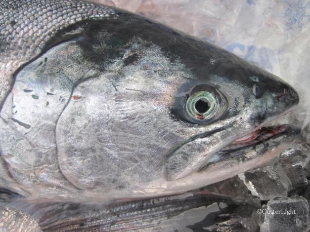 Cutterlight Lox Salmon