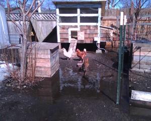 Erin's chicken coop in Anchorage.