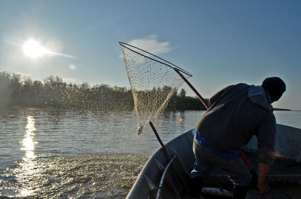 A man holding a net is silhouetted from behind as he looks over the susnny water.