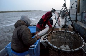 Isadore and Patrick back at Kwik'pak unloading their catch. They caught 200 Chums. Photo by Kyle Clayton, KYUK - Bethel.