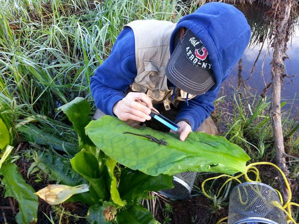 Josh Ream chronicling amphibians along the Stikine River. Photo courtesy Seth Perry.