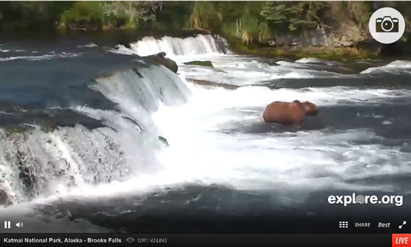 Click to view the live bear cam.