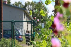 flowers bragaw gardens