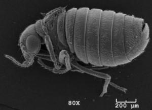 bug-id