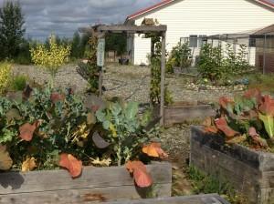 Jamie Woodside 2013 Garden Harvest