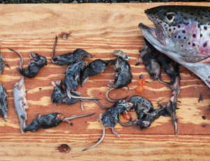Nature Conservancy Shrew Eating Trout Excerpt