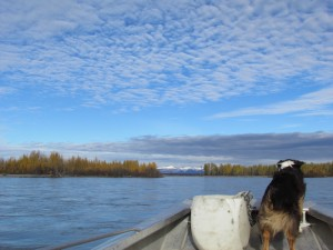 Taking a skiff up the Susitna in early October. Hillman/APRN.