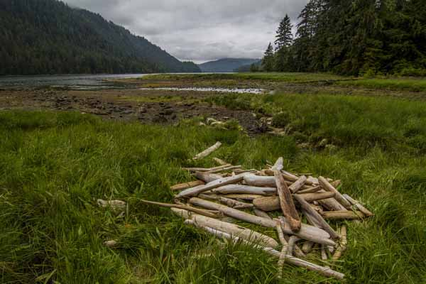 Federal judge halts Tongass timber sale on Prince of Wales Island