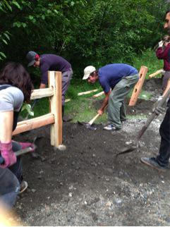 Volunteers bury fence posts.