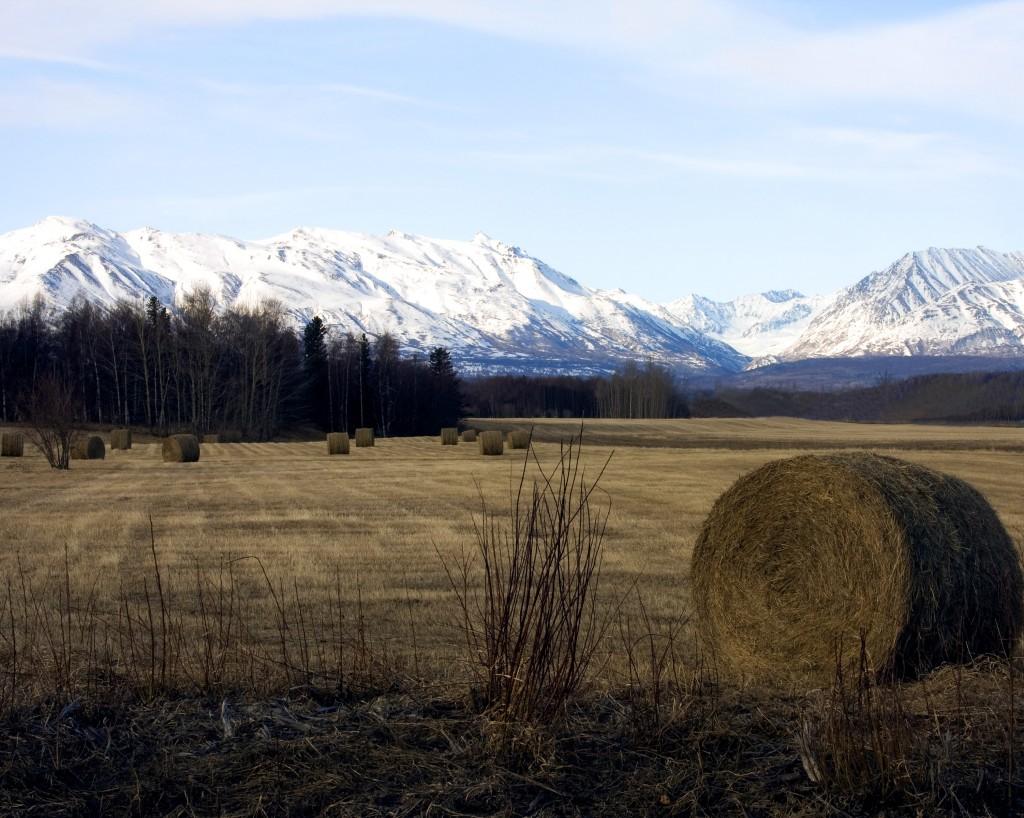 A hay field near Palmer, Alaska.