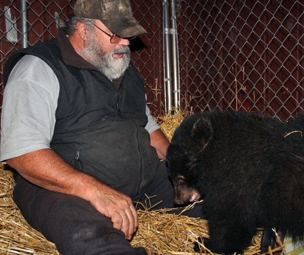 Les Kinnear, who runs Fortress of the Bear, feeds the 9-month-old black bear cub by hand. Photo by Rachel Waldholz, KCAW - Sitka.