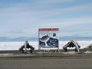 Whales & World Problems – Combining Culture & Academics