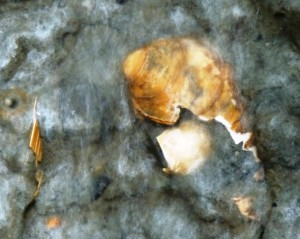 Pieces of seashells thousands of years old emerge from an eroding bank on the University of Alaska Southeast's  Juneau campus. Ed Schoenfeld, CoastAlaska News