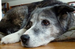 Good old dogs: Treating them well in the end
