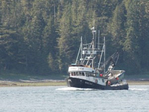 Record Run Leads To Glut Of Pink Salmon