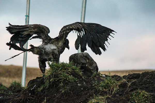 A burnt eagle spreads its wings. Photo courtesy Susie Silook, wife of Keith Hamilton.