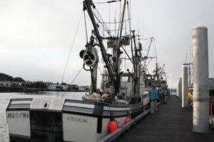 Seiners wait at the newly reopened ANB harbor for the 2014 Sitka Sound sac roe herring fishery to open. Photo by Rachel Waldholz, KCAW - Sitka.