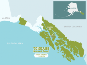 The Tongass National Forest could resume allowing logging in roadless areas under a court ruling. But it won't happen immediately — or at all. (U.S. Forest Service Image)