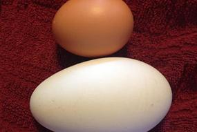 jamie-woodside-goose-egg-excerpt