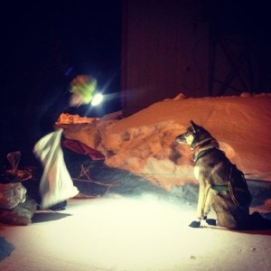 Jeff Kings feeds his dogs after their run into Nulato. Some teams stayed long in the sleepy village, while others pushed on down the trial. Photo by Emily Schwing, KUAC - Fairbanks.