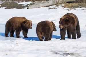 A Trip to the Alaska Wildlife Conservation Center