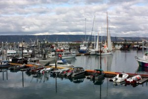 Parnell Signs Law Excluding Homer Harbor From Habitat Area