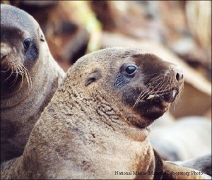 NMFS Clears Commercial Fishing In Sea Lion Habitat