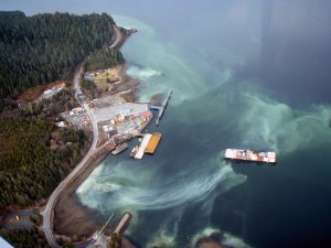 Project To Restore Herring, Starting In Sitka