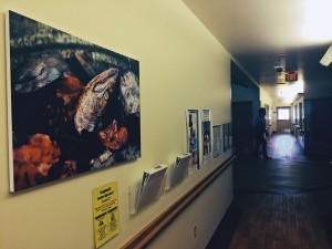 A Hallway at the Elder Home in Bethel is decorated with a photo of fish. (Photo by Daysha Eaton, KYUK - Bethel)