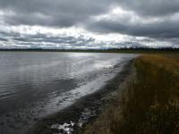 Willows have grown up in bands around Twelvemile lake as the water level has receded over the last 30 years, cooling the soil and encouraging new permafrost 'aggradation.' (Credit Martin Briggs / US Geological Survey)