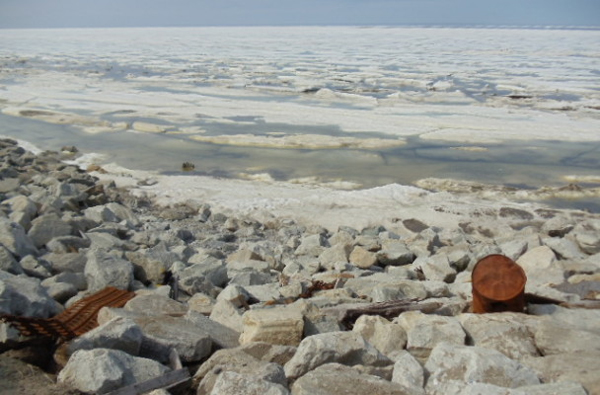 Contaminated nearshore sea ice. (Photo courtesy Barret Eningowak, DEC)