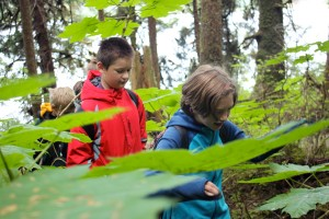 Campers maneuver around the forest of devil's club surrounding Auke Lake Trail. (Photo by Lisa Phu/KTOO)