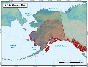 A map of the Little Brown Bat's known range in Alaska. The Little Brown Bat is the most common bat in the state (Alaska Department of Fish and Game).