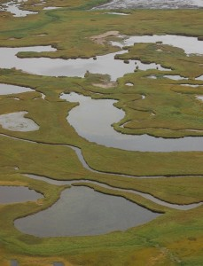 Wetlands in the Izembek NWR. (Kristine Sowl/USFWS)